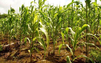 InnovPlantProtect: ciência e agricultura de mãos dadas em Elvas