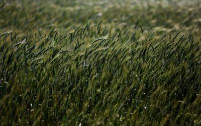 Novo laboratório vai desenvolver plantas resistentes a doenças e pesticidas biológicos