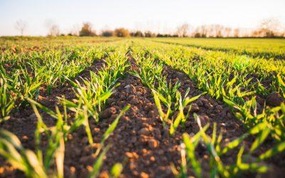 Estratégia alternativa para proteger culturas sem modificação genética
