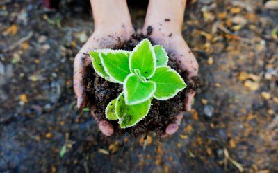 """Biotecnologia: revolução agrícola """"ao virar da esquina"""""""